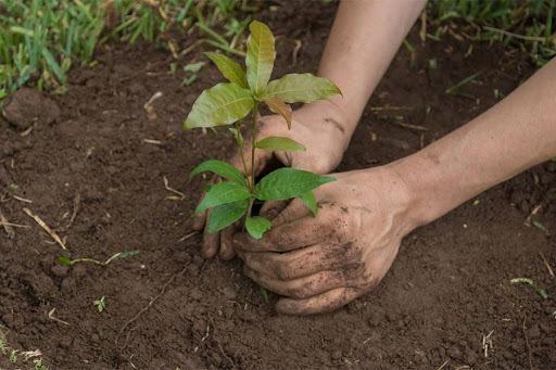 Desde acceso a energía a programas de reforestación: 16 iniciativas postularon al Concurso de Buenas Prácticas 2021